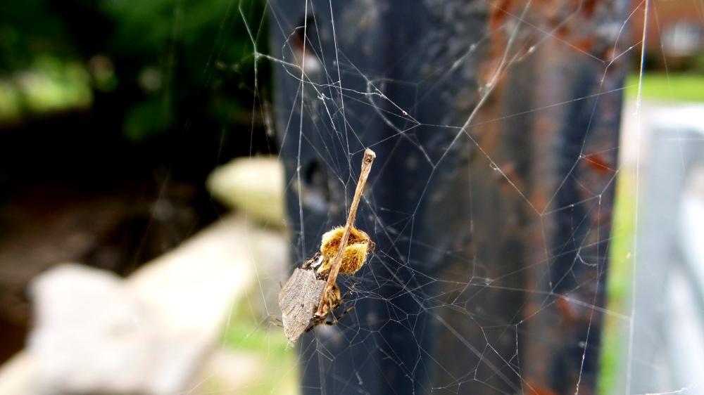 bee spider web pennsylvania travel