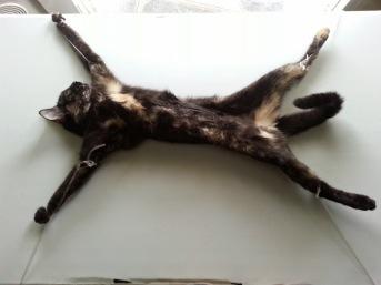 kitten spaying volunteer travel jamaica