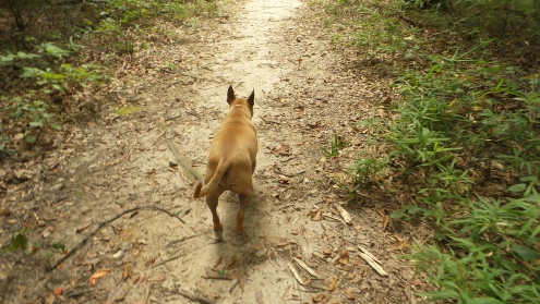 atlanta path hiking trail travel