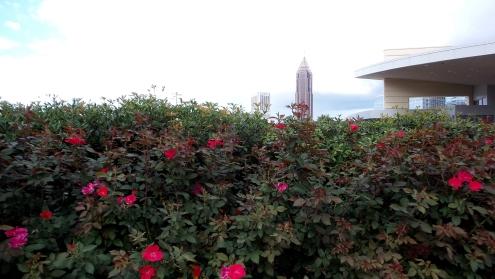 atlanta skyline flowers travel