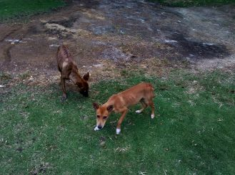 stray dogs animal volunteer rights travel jamaica