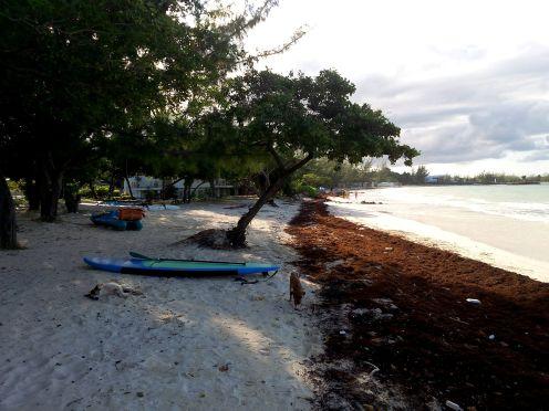good hope beach jamaica travel surf surfboard