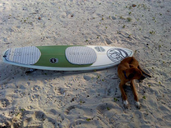 dog surboard beach jamaica travel