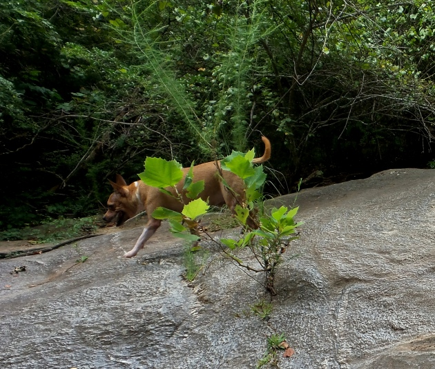 cascade trail hiking trails travel