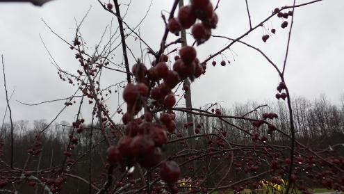 rain nature iowa sunderbruch park