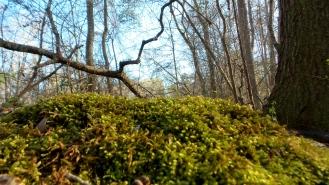 moss nature macroshot