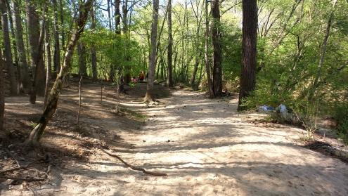 hiking travel explore atlanta lullwater park trail