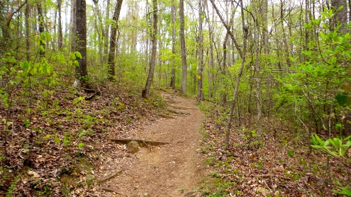 hiking trail travel explore sweetwater creek state park