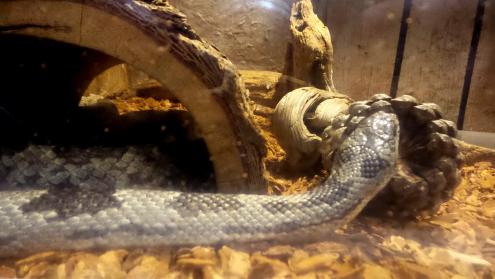 Snake Panola Mountain State Park