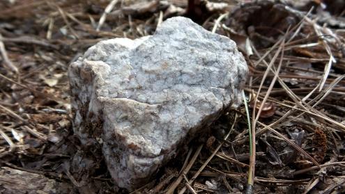 31-snake-skin-rock-on-trail