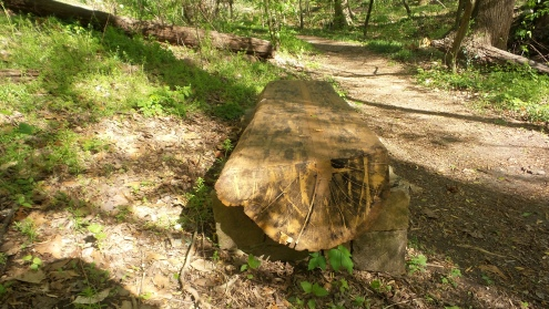 11 Log Bench on Deepdene Park Trail
