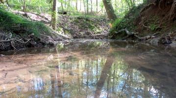 16 Depende Park Trail Stream