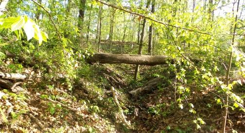 21 Depene Park Fallen Tree