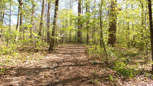 23 Deepdene Park Hiking Trail