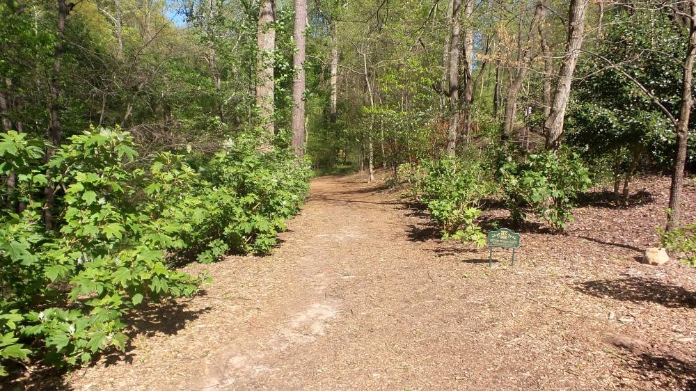 3 Sunny Depende Park Hiking Trail.jpg