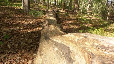 34 Depende Park Tree