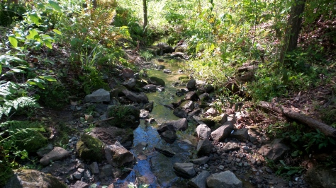 52 Depende Park Stream