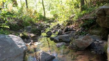53 Depende Park Stream