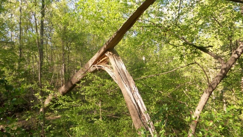 54 Depende Park Broken Tree