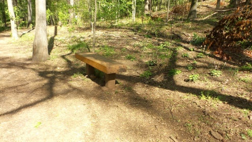 7 Bench on Deepdene Park Hiking Trail