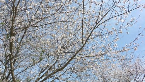 Georgia Spring Blossoms