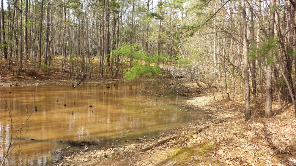 Pond on Georgia Hiking Trail