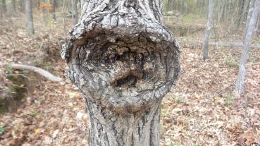 Tiki Man Tree 4