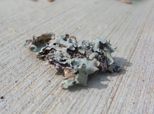 Tree Bark Closeup