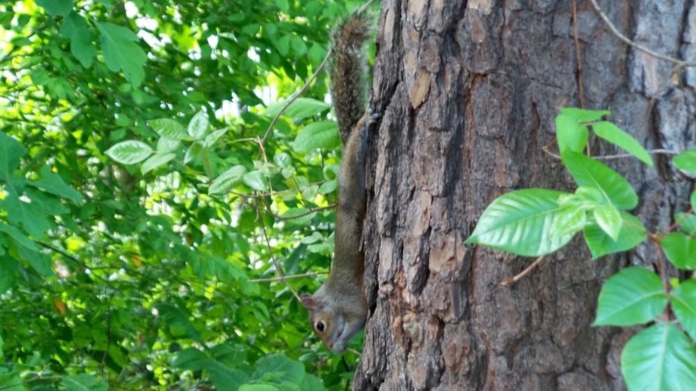 11 Jesters Creek Squirrel.jpg