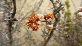 33 Torrey Pines Flowers
