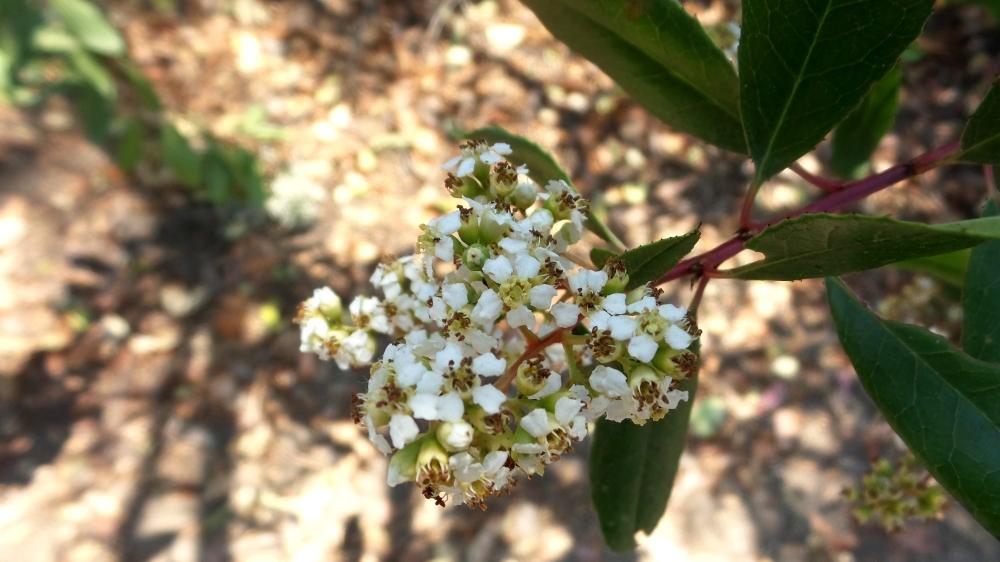 6 Annies Canyon Flower.jpg