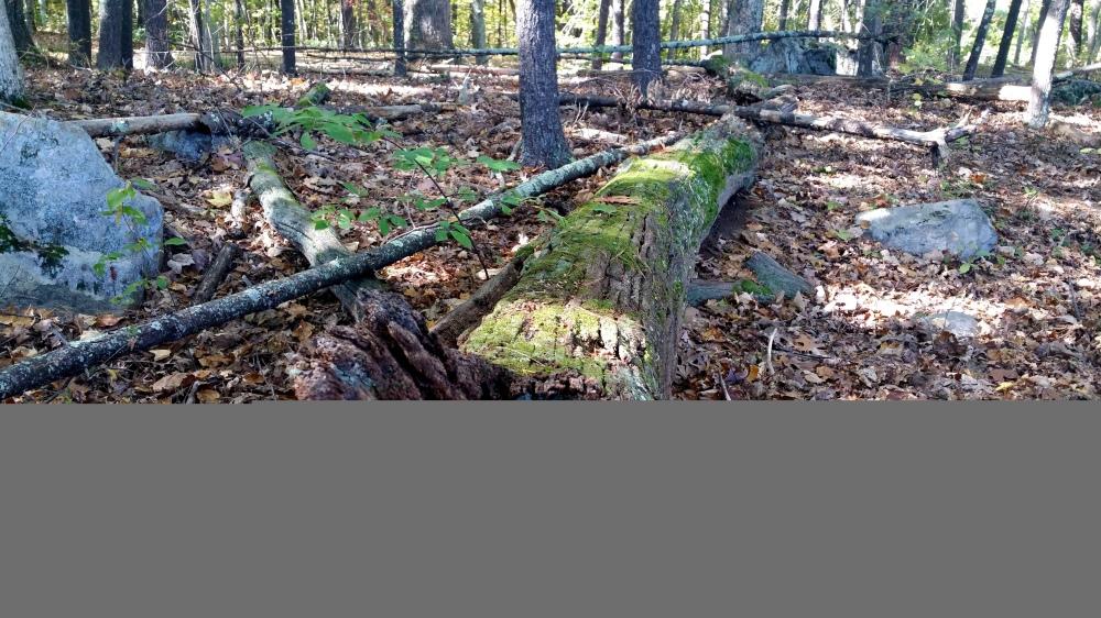 39 Phone Relooping in the Woods.jpg