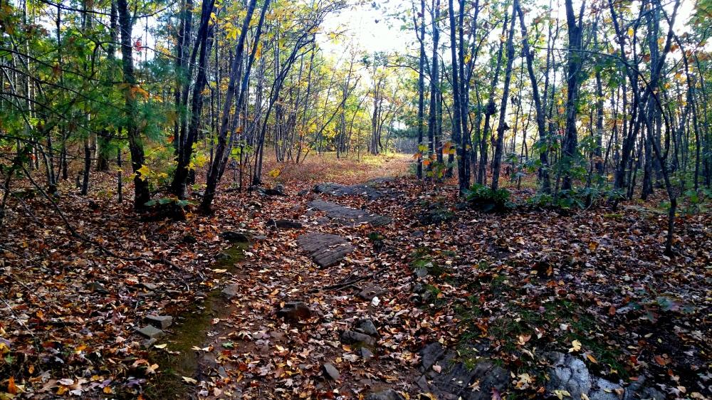 20 Horse Hill Nature Preserve Autumn Leaves.jpg