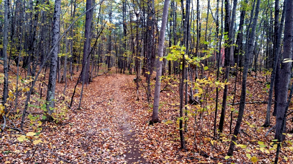 22 Horse Hill Nature Preserve Autumn Colors