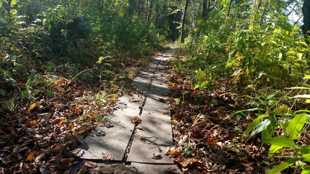 5 Deer Jump Reservation Massachussetts.jpg