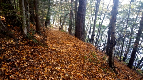 8 Deer Jump Reservation Bay Circuit Trail
